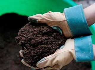 Soil from Compost